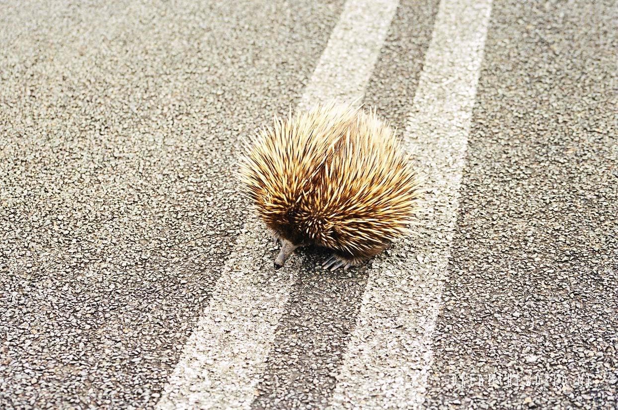 Kangaroo Island Zuid Australië