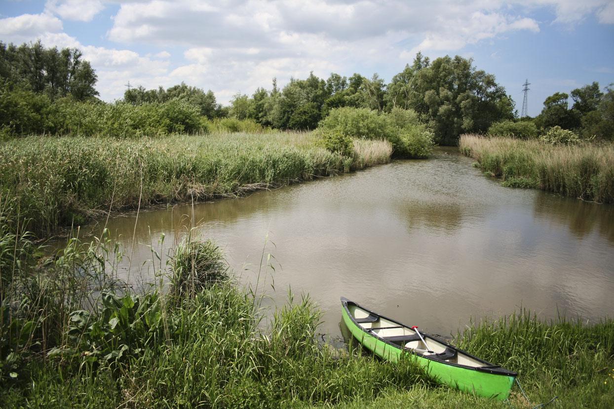 Kanoën Biesbosch