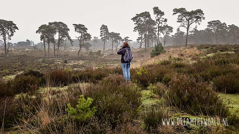 Winterwandeling in Kalmthoutse heide