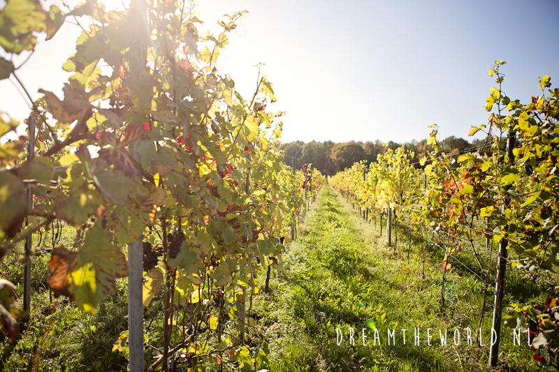 Wandelen langs de wijngaarden van Nederland