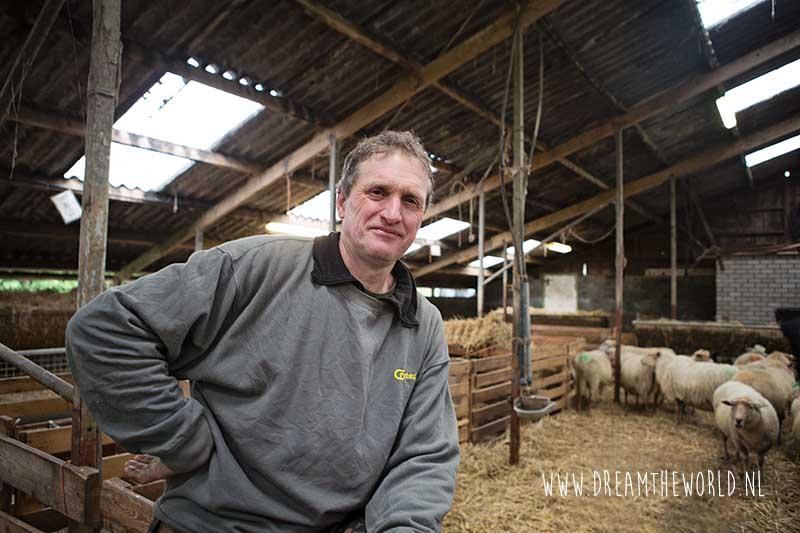Wandelen met 525 schapen door Middelburg