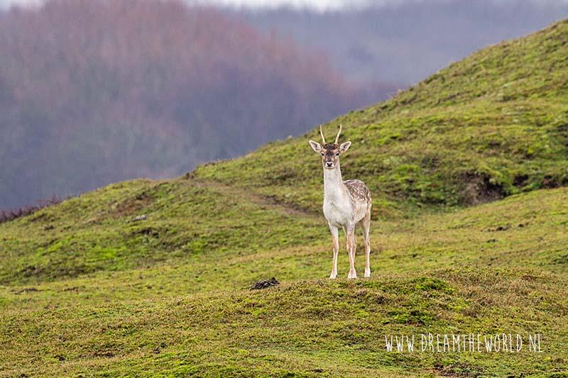 5x de mooiste herfstwandelingen in Zeeland | Wandelen in Zeeland