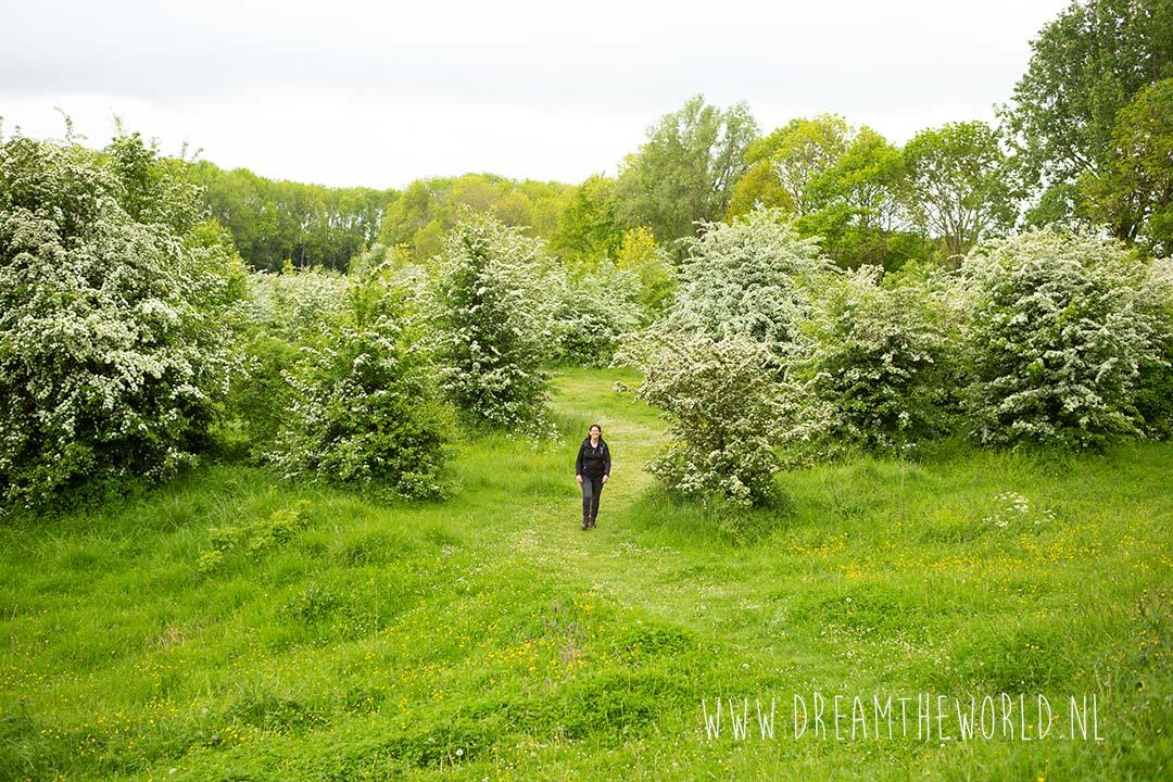 Wandelen langs wijngaarden in Nederland