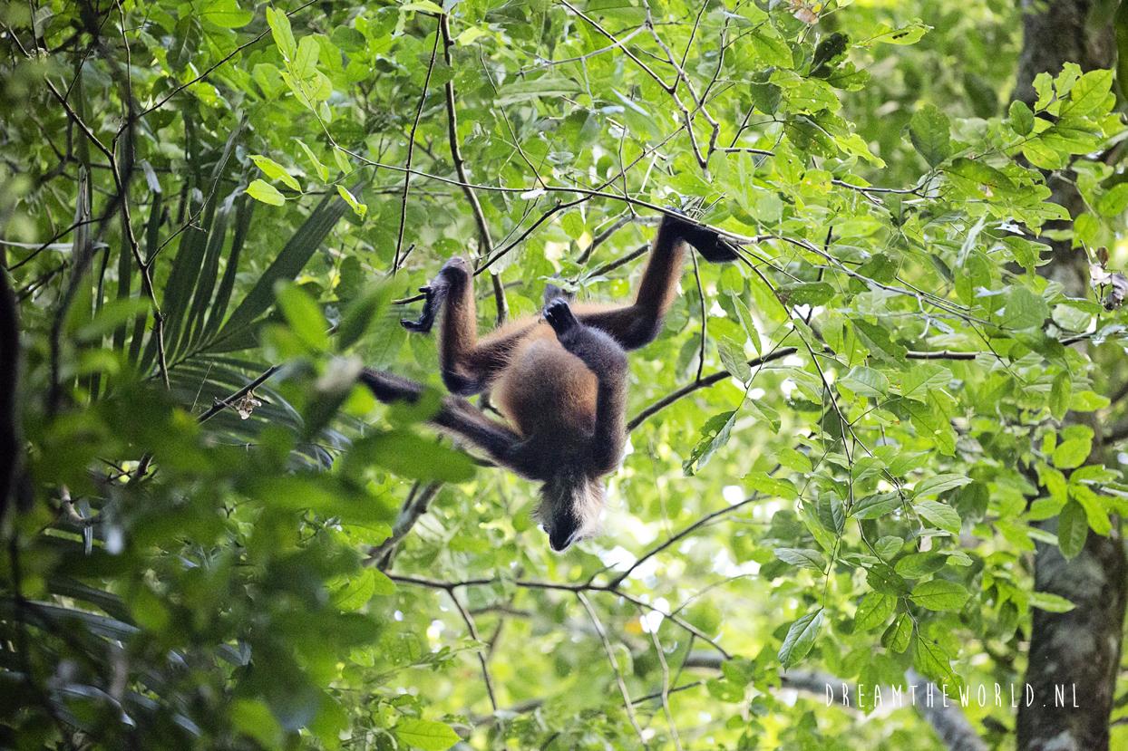 De dieren van Costa Rica