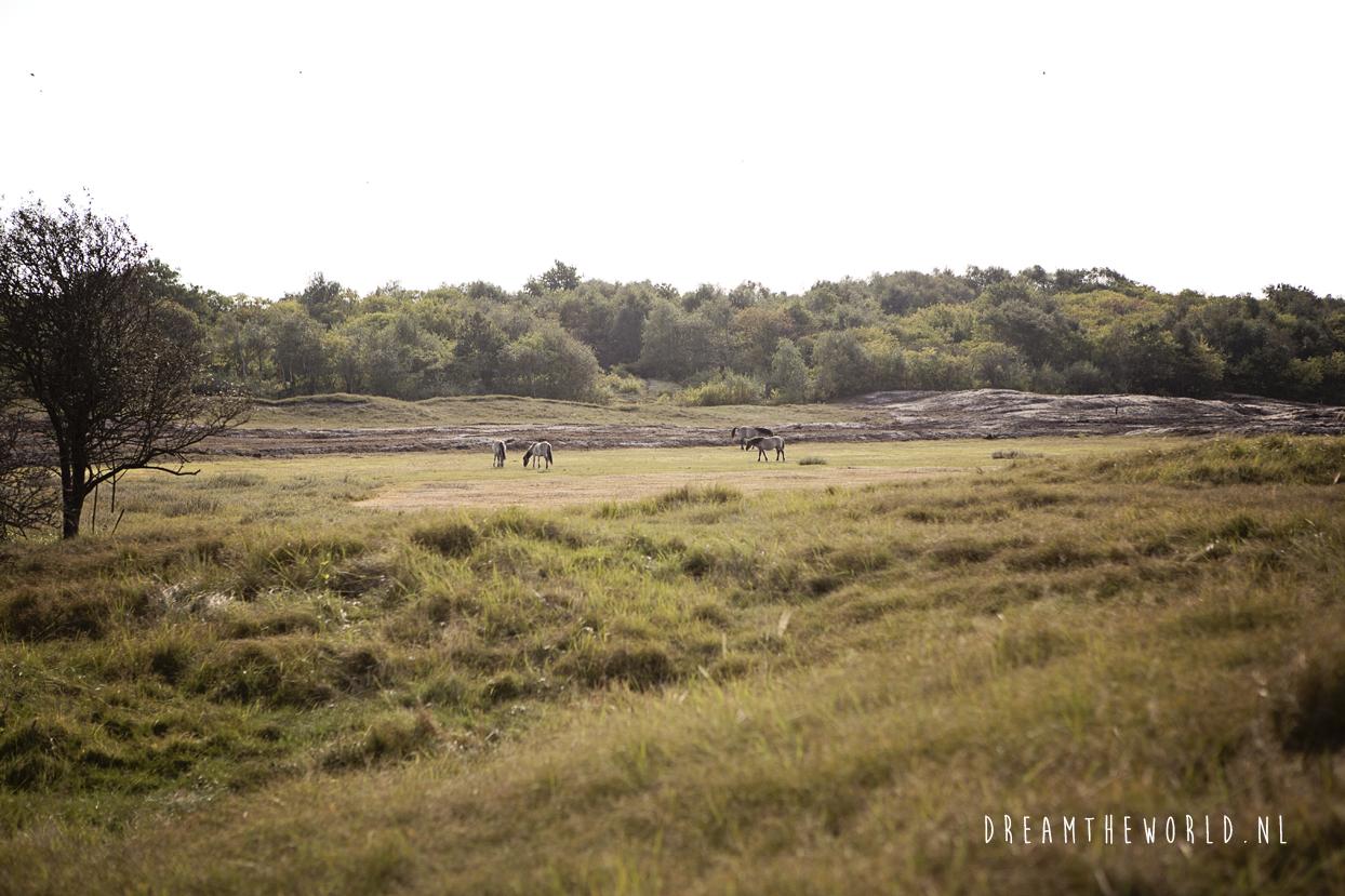 Wandelen in natuurgebied Oranjezon