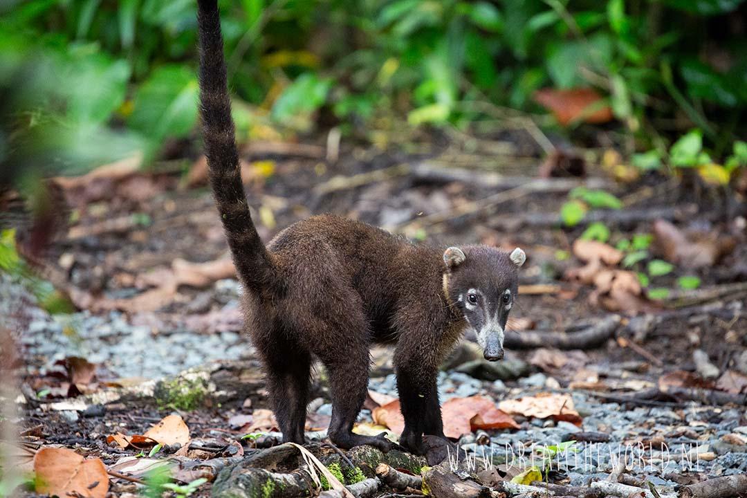 Boca Topada Costa Rica neusbeer