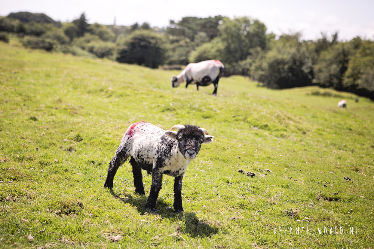 Bodmin Moor Zuid-Engeland
