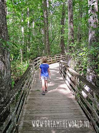 Boardwalk Corkscrew Swamp Sanctuary in Florida