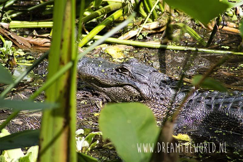 Corkscrew Swamp Sanctuary in Florida
