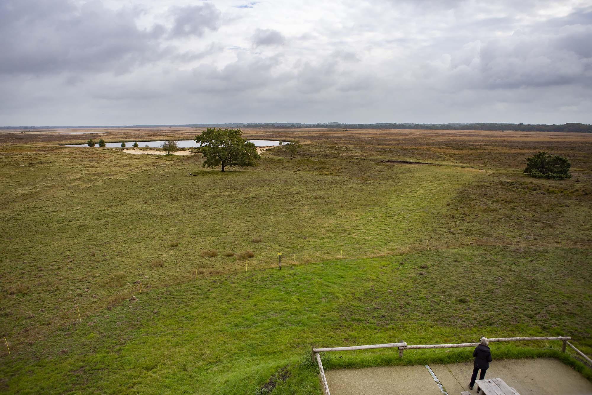 Uitzicht vanaf uitkijktoren Dwingelderveld Ruinen