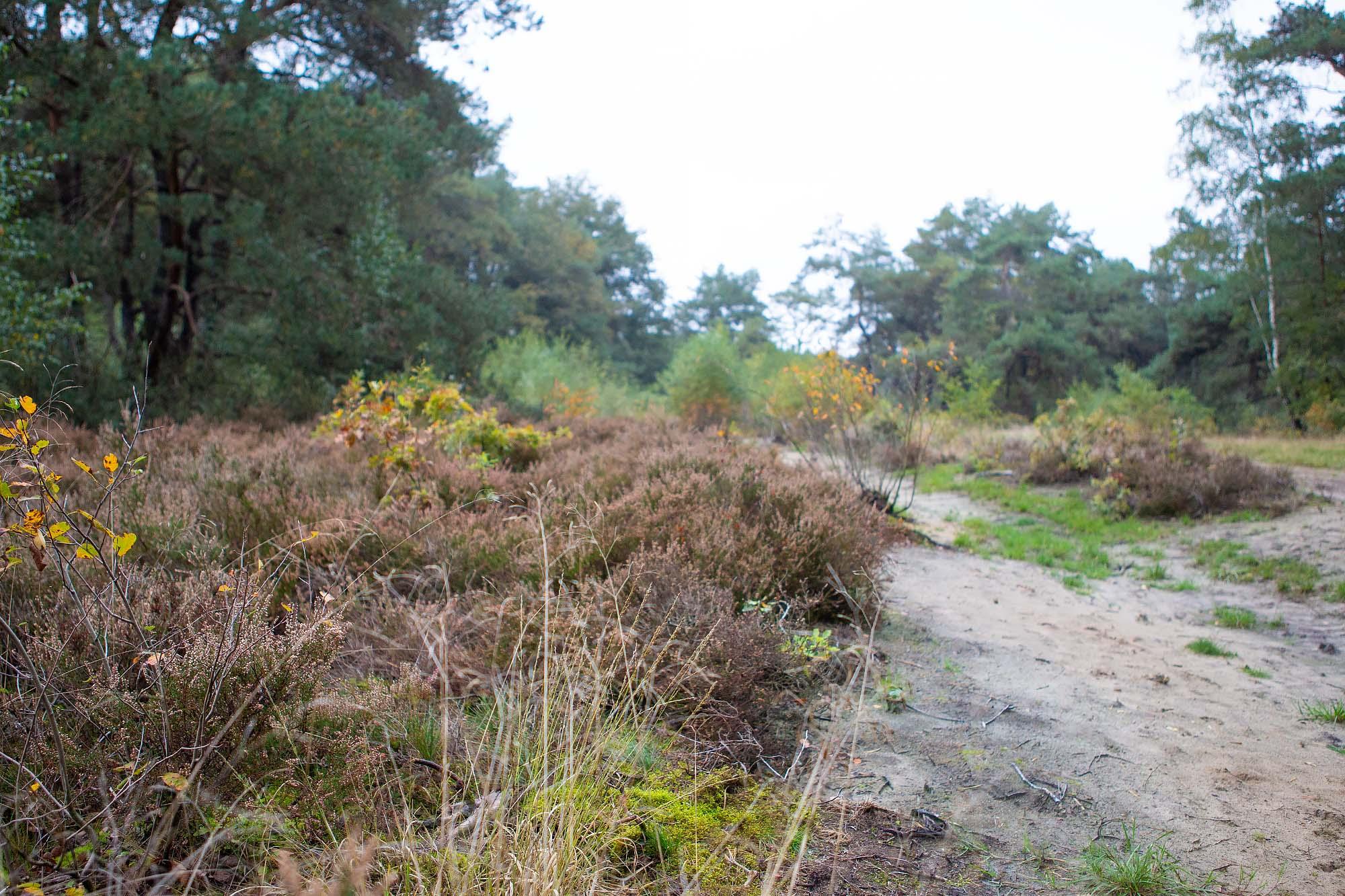 Dwingelderveld wandelroute Ruinen