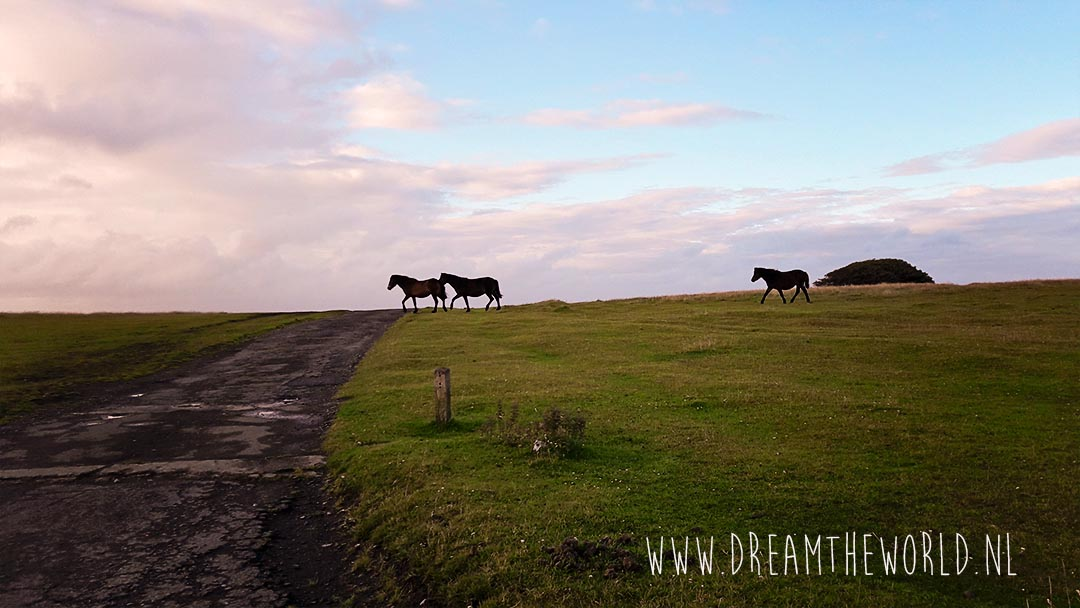 Exmoor Pony's in Exmoor National Park