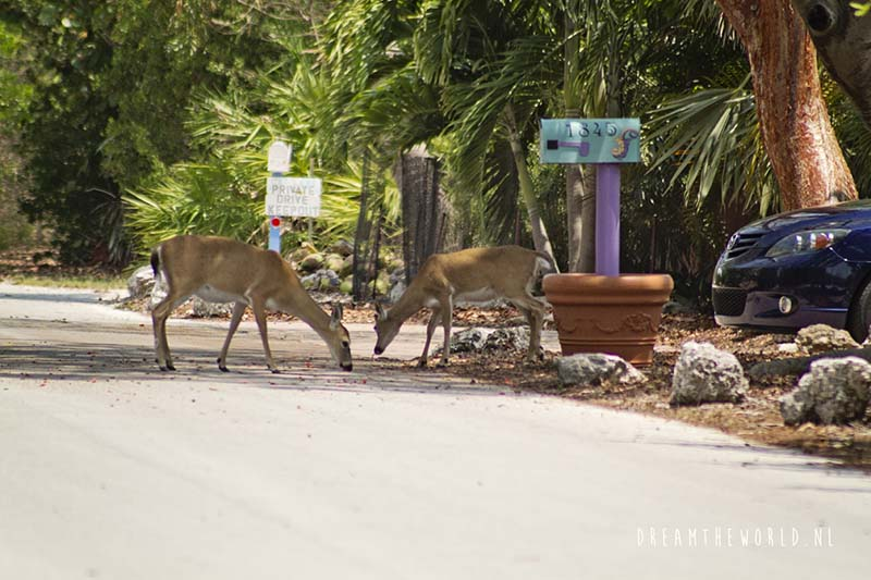 Florida herten