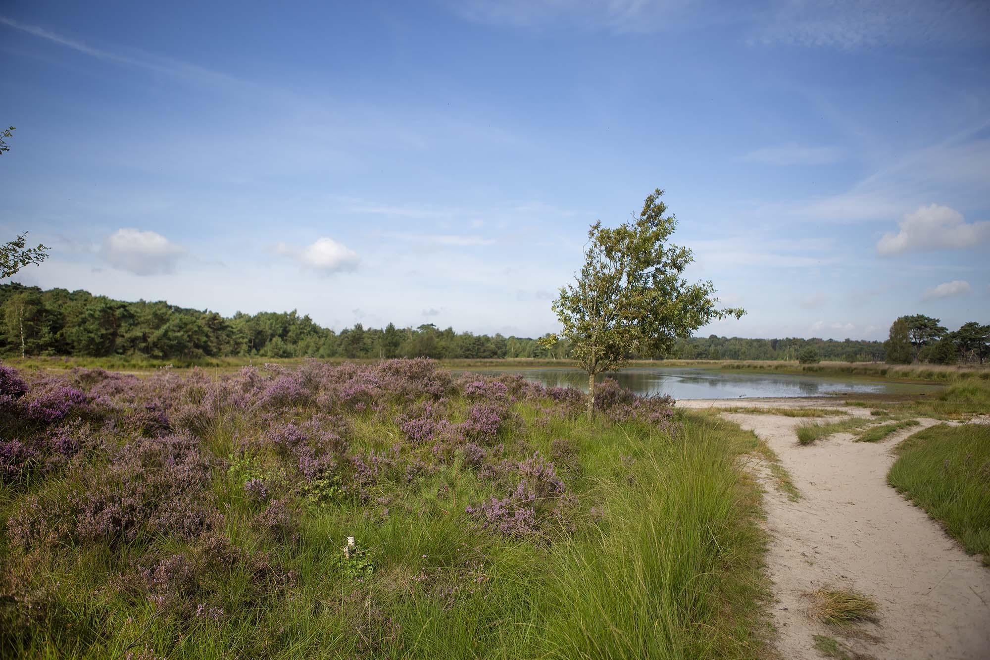 Wandelen Kalmthoutse Heide