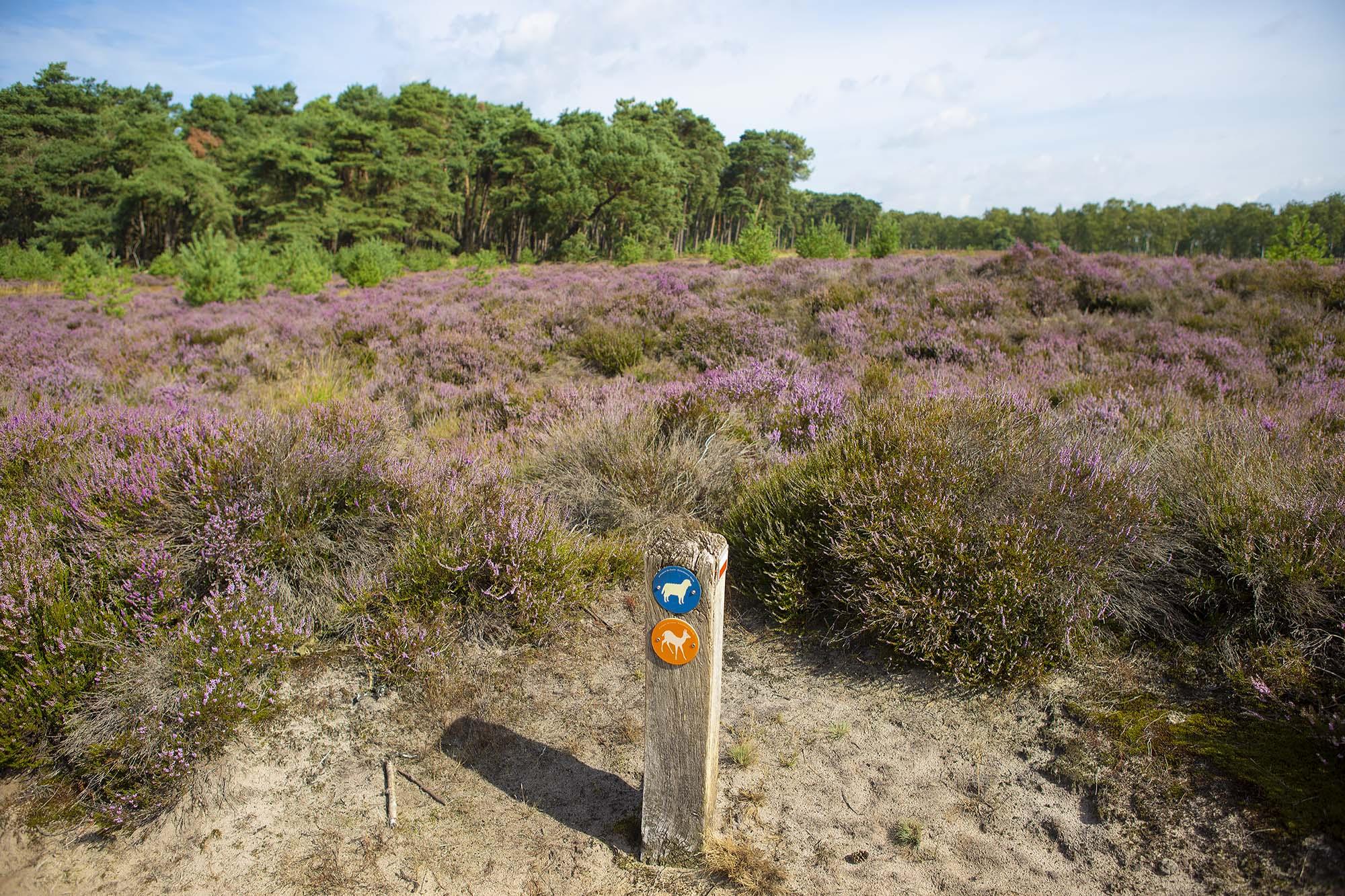 Wandelen Heide Kalmthoutse Heide