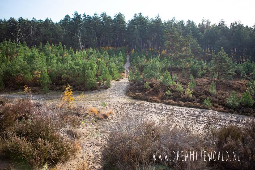 Heidegebied Kalmthoutse Heide