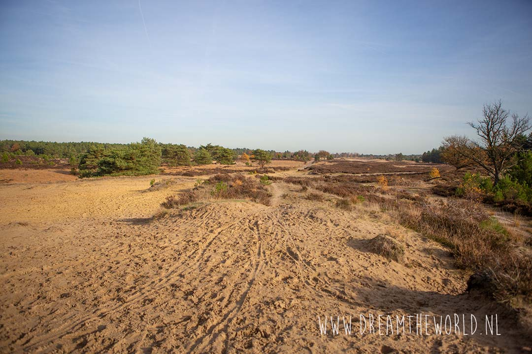 Zandvlakte Kalmthoutse heide