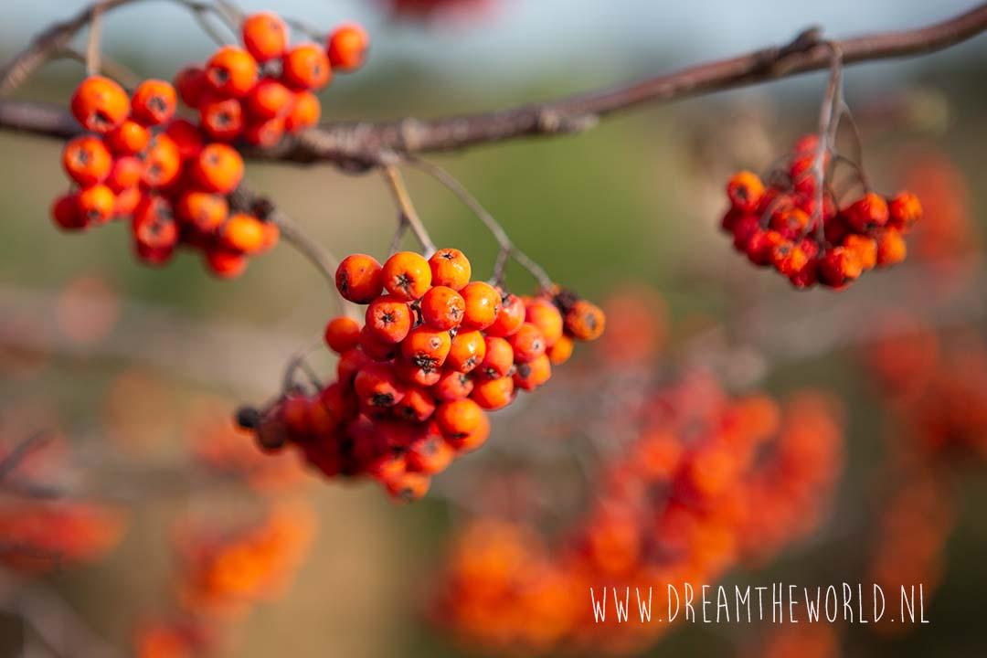 Kalmthoutse Heide herfstwandeling Mier en Haas