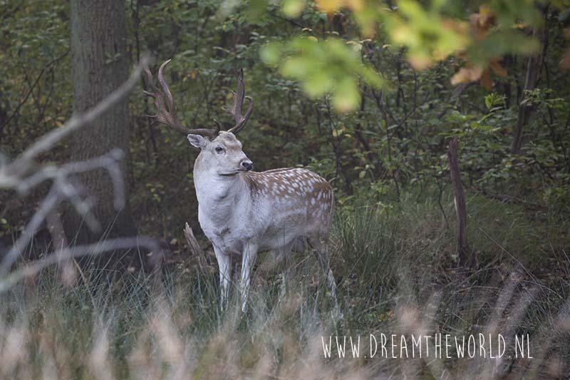Damhert Zeeland outdooractiviteit Nederland