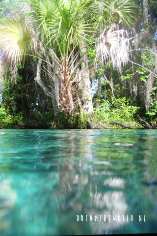 snorkelen bij Crystal River