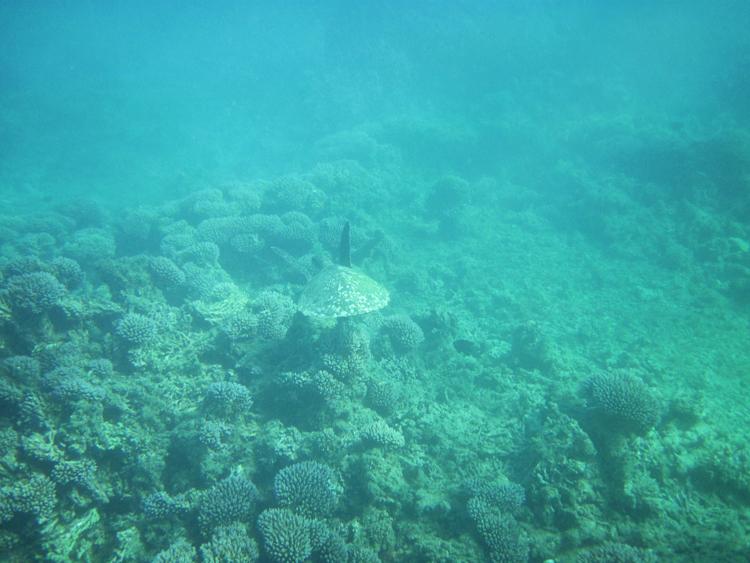 schildpad West Australië