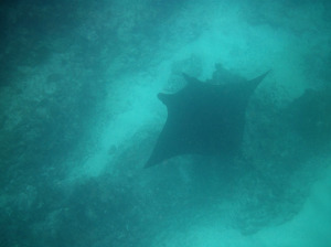 Onze tips voor snorkelen met wilde zeedieren