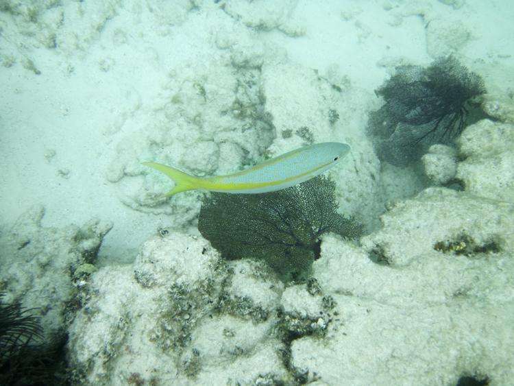 Onderwaterwereld John Pennekamp