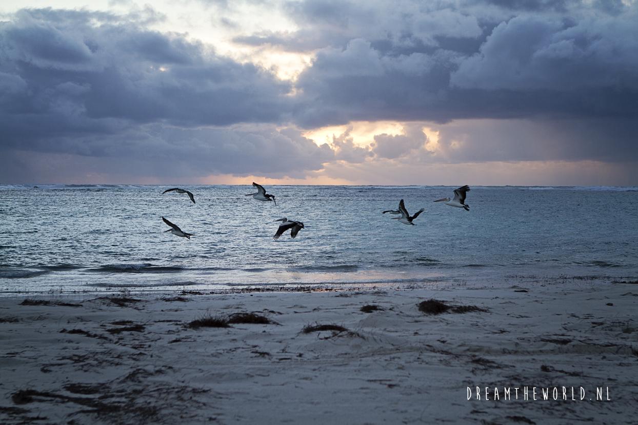 West Australie