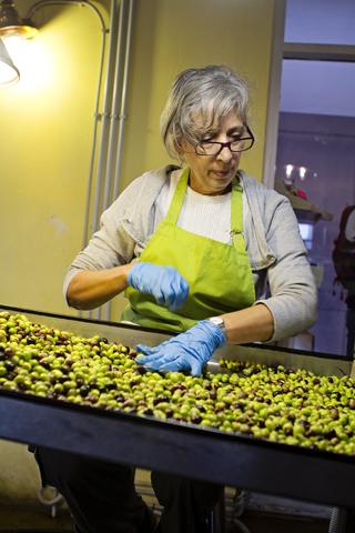 Griekenland op zoek naar het mediterrane dieet deel 2 Olijfolie