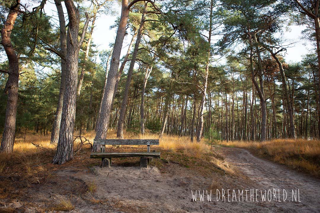 bankje in Kalmthoutse Heide