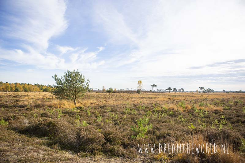 Grenspark Kalmthoutse heide | wandelroute Ree