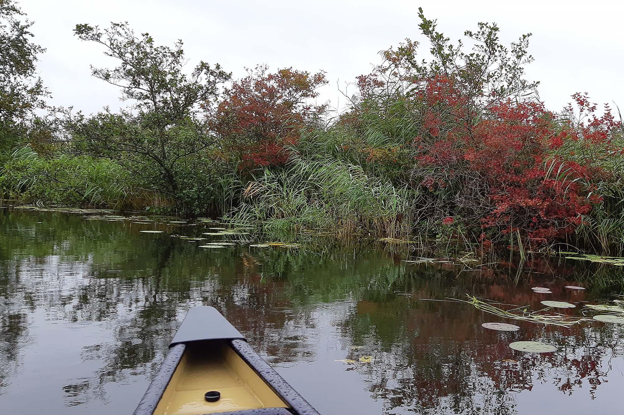 Kanoën Weerribben-Wieden Overijssel