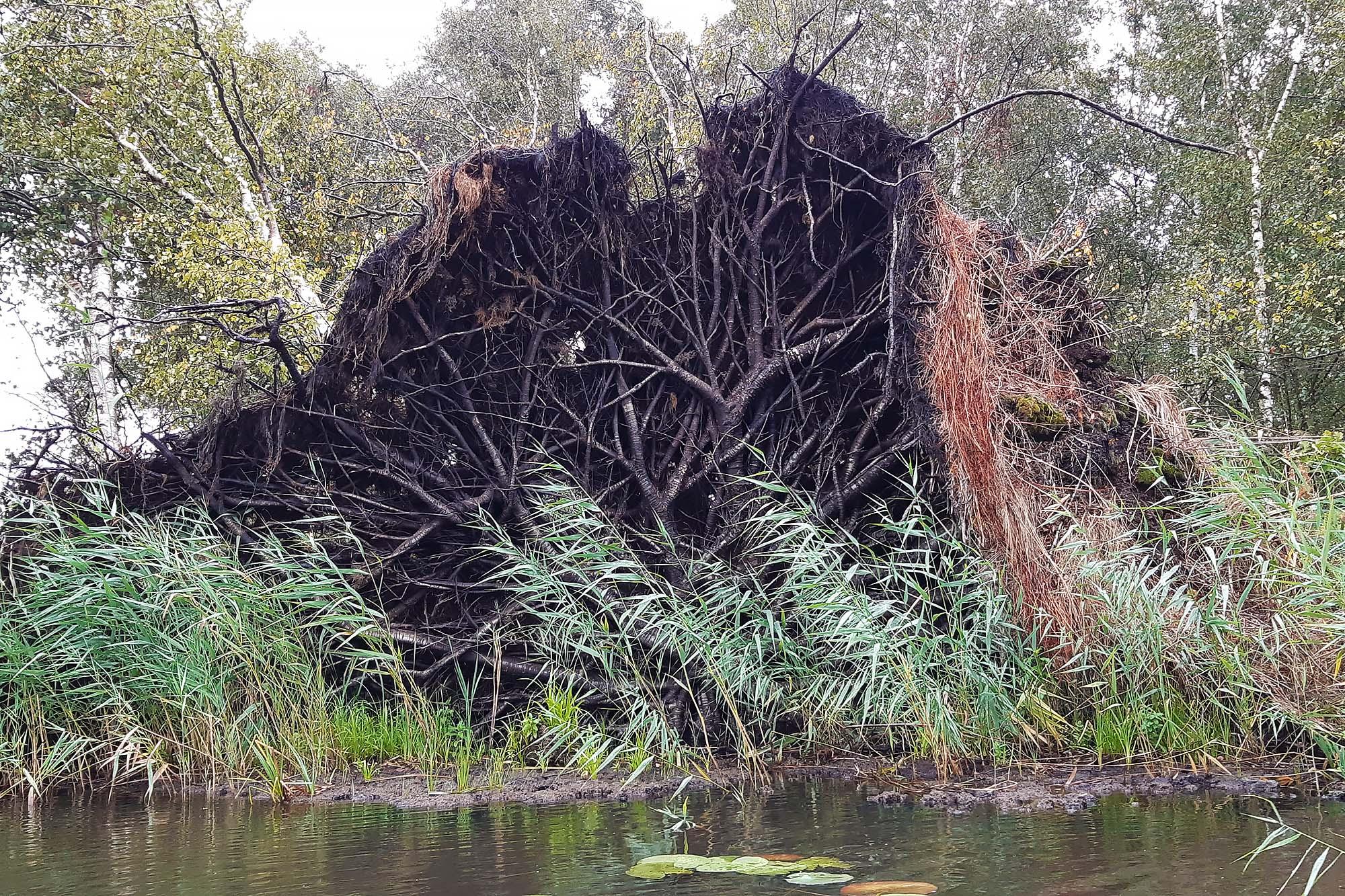 Nationaal Park Weerribben-Wieden omgevallen boom