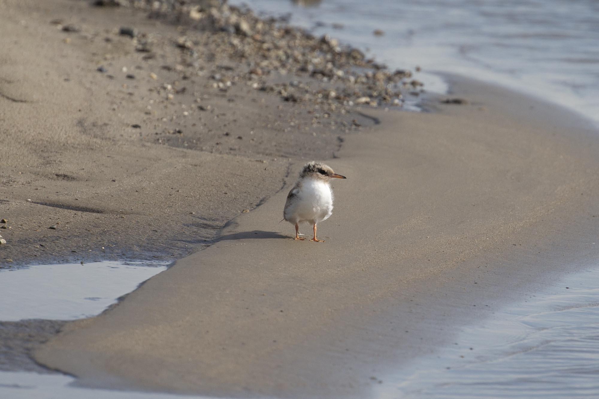 natuureiland Marker Wadden weekendje weg