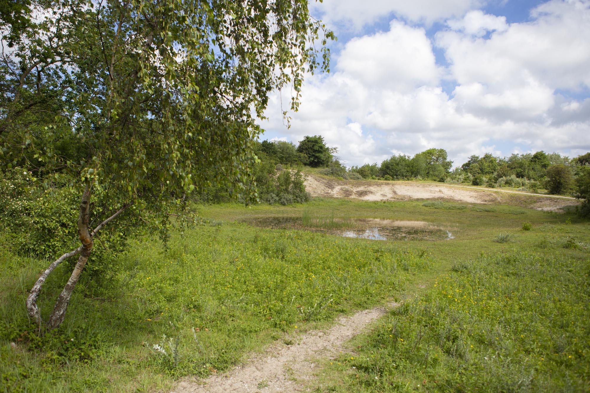 Wandelen in de Duinen van Oostvoorne: De Meidoornroute