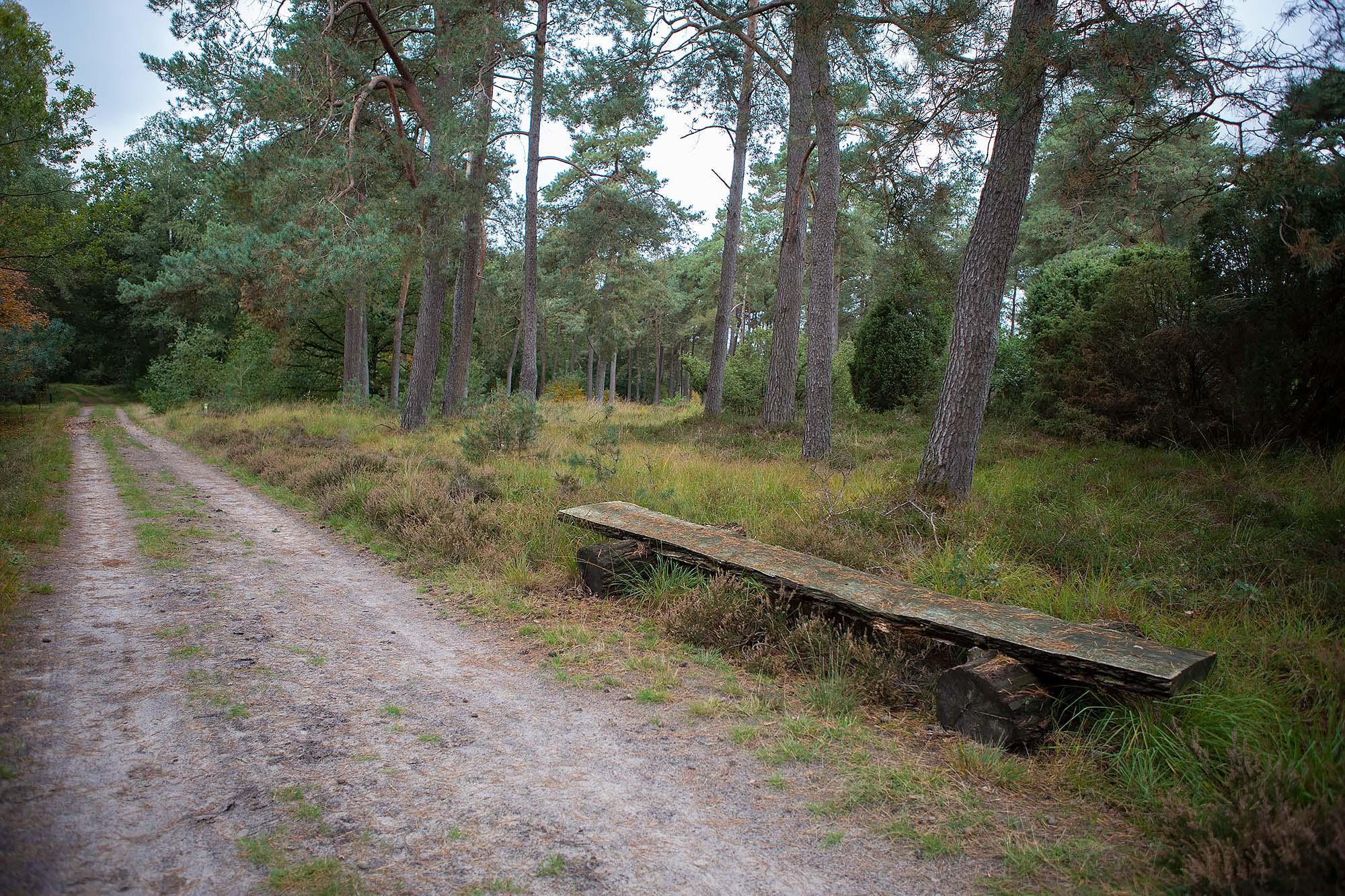 Wandelen Dwingelderveld wandelroute Spier en Witteveen