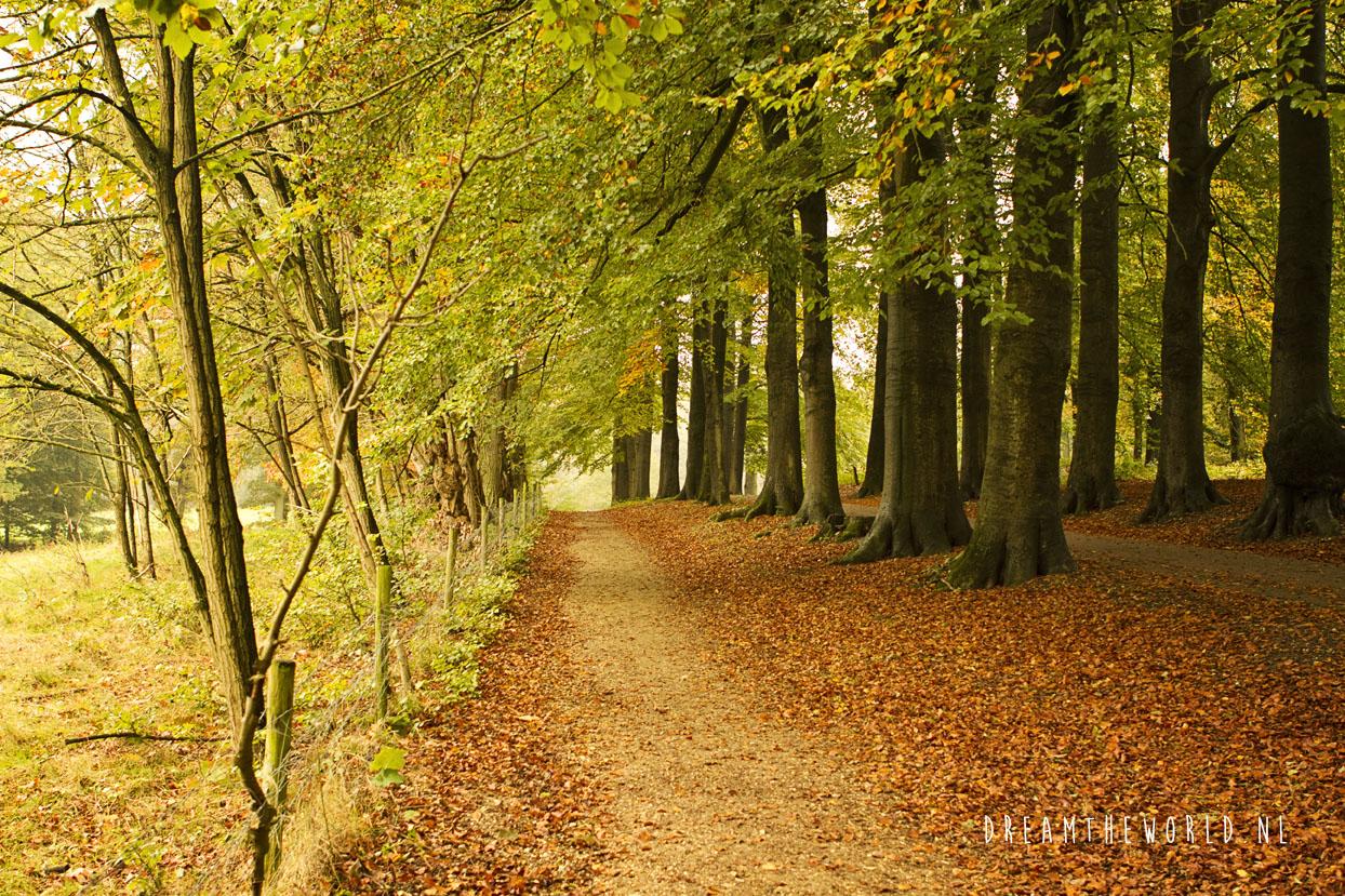 Nationaal Park de Veluwezoom Veluwe Rheden (1)