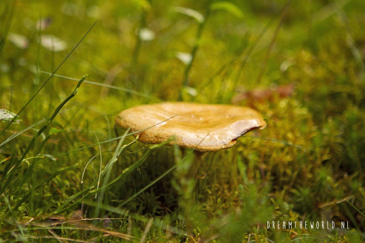 Nationaal Park de Veluwezoom Veluwe Rheden (10)
