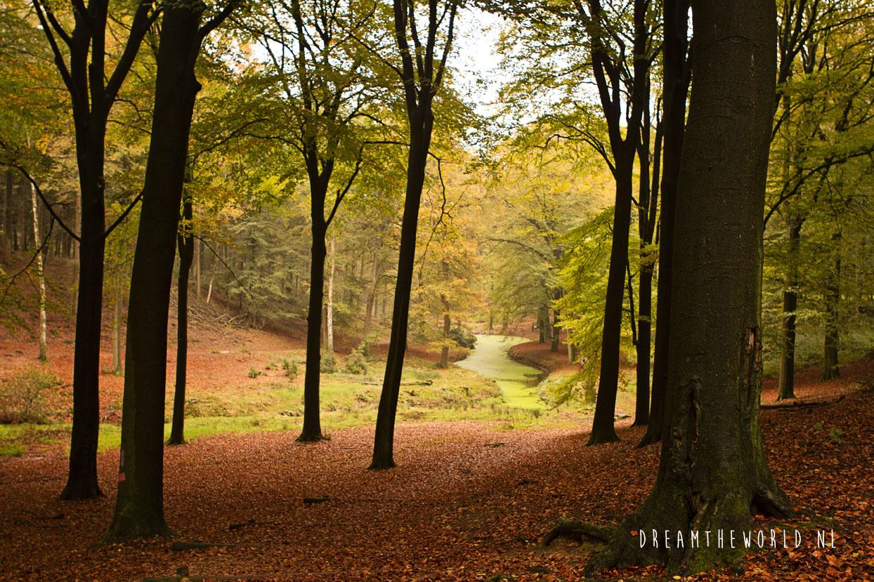 Nationaal Park de Veluwezoom Veluwe Rheden (3)