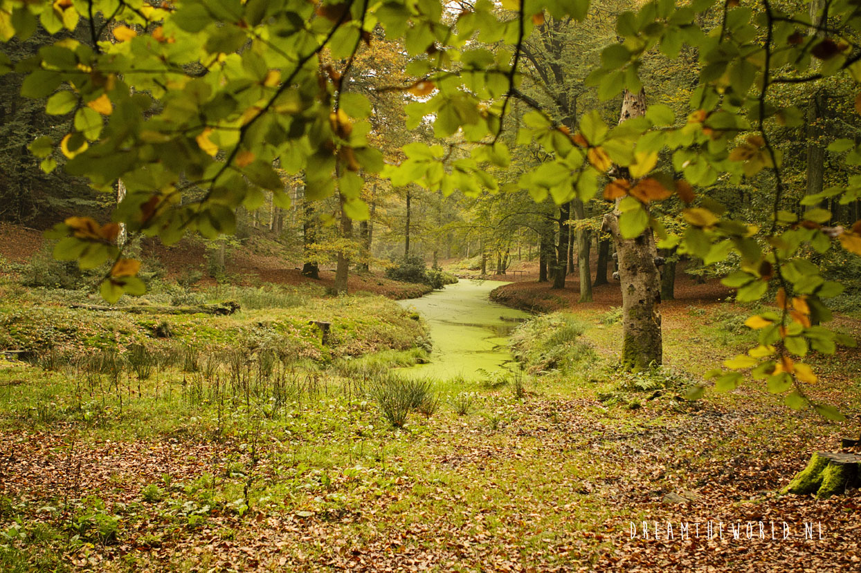 Nationaal Park de Veluwezoom Veluwe Rheden (5)