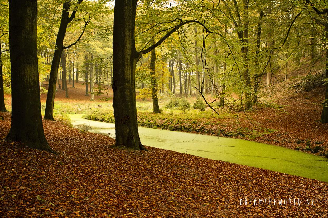 Nationaal Park de Veluwezoom Veluwe Rheden (6)
