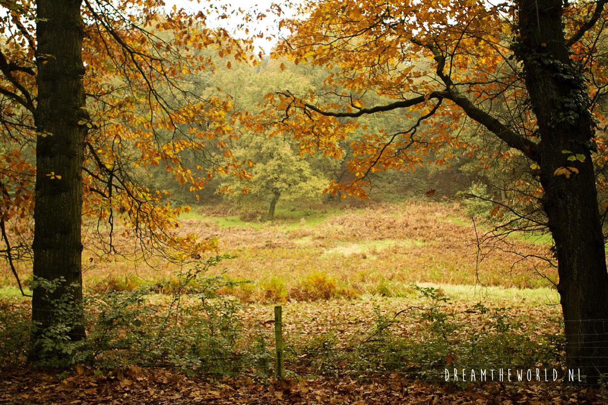 Nationaal Park de Veluwezoom Veluwe Rheden (8)