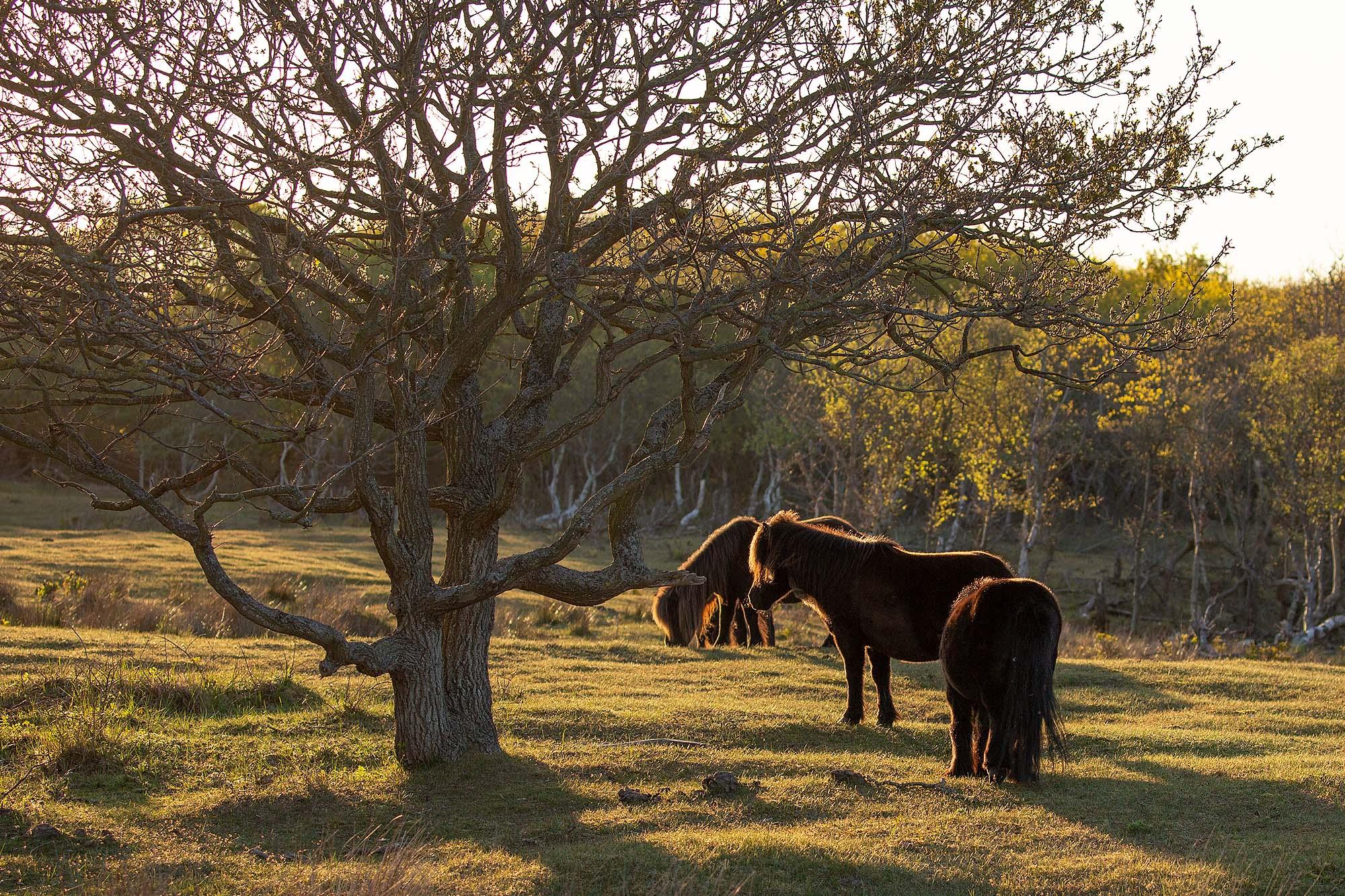 Natuurgebied De Manteling Zeeland