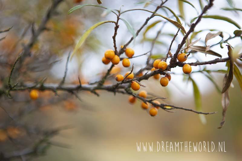 herfst Oranjezon