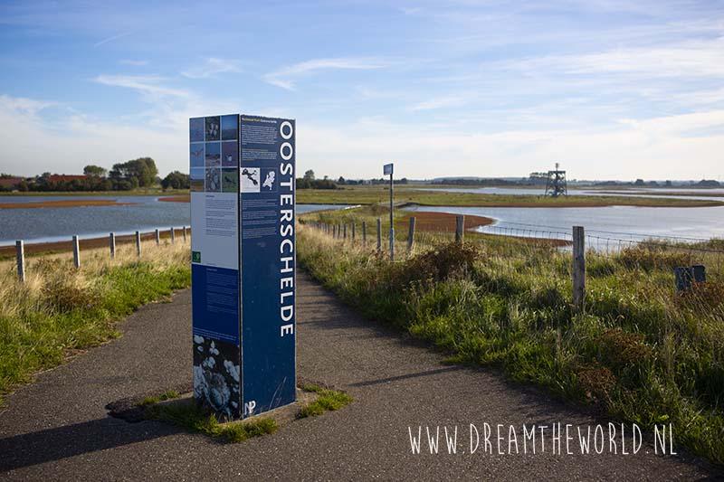 Herfsttip: rode zeekraal en vogels spotten bij Plan Tureluur | Wandelen in Zeeland