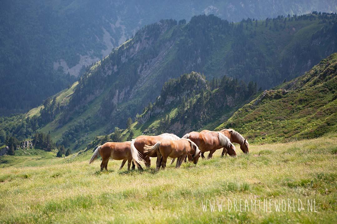 Pyreneeën Ariège