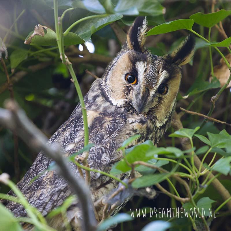 Vogels spotten en fotograferen in Zeeland Ransuil