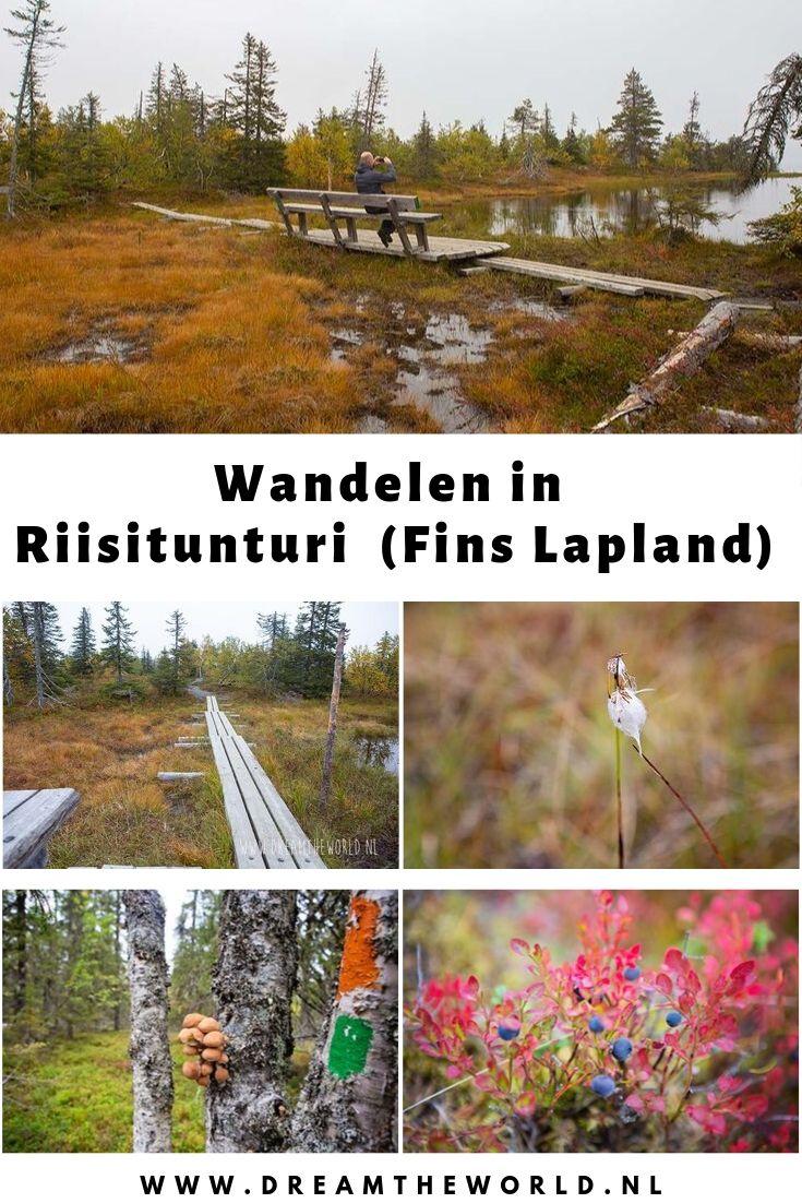 Wandelen in Riisitunturi NP in Fins Lapland #finland #wandelen #finslapland #riisitunturi