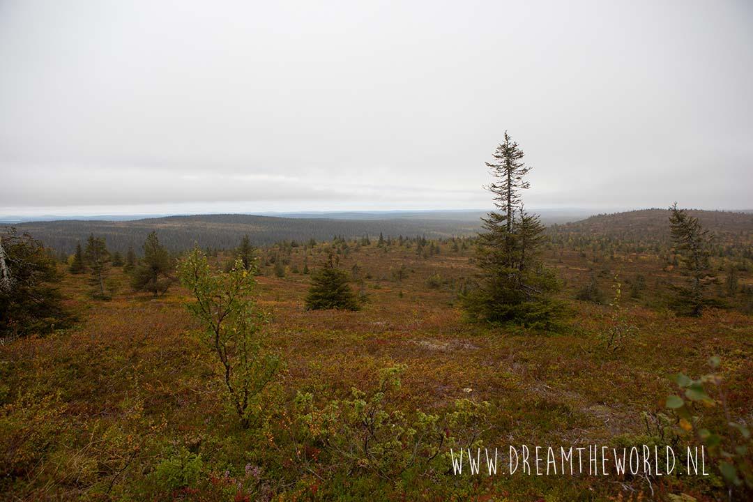 Riisitunturi NP Fins Lapland uitzichtspunt