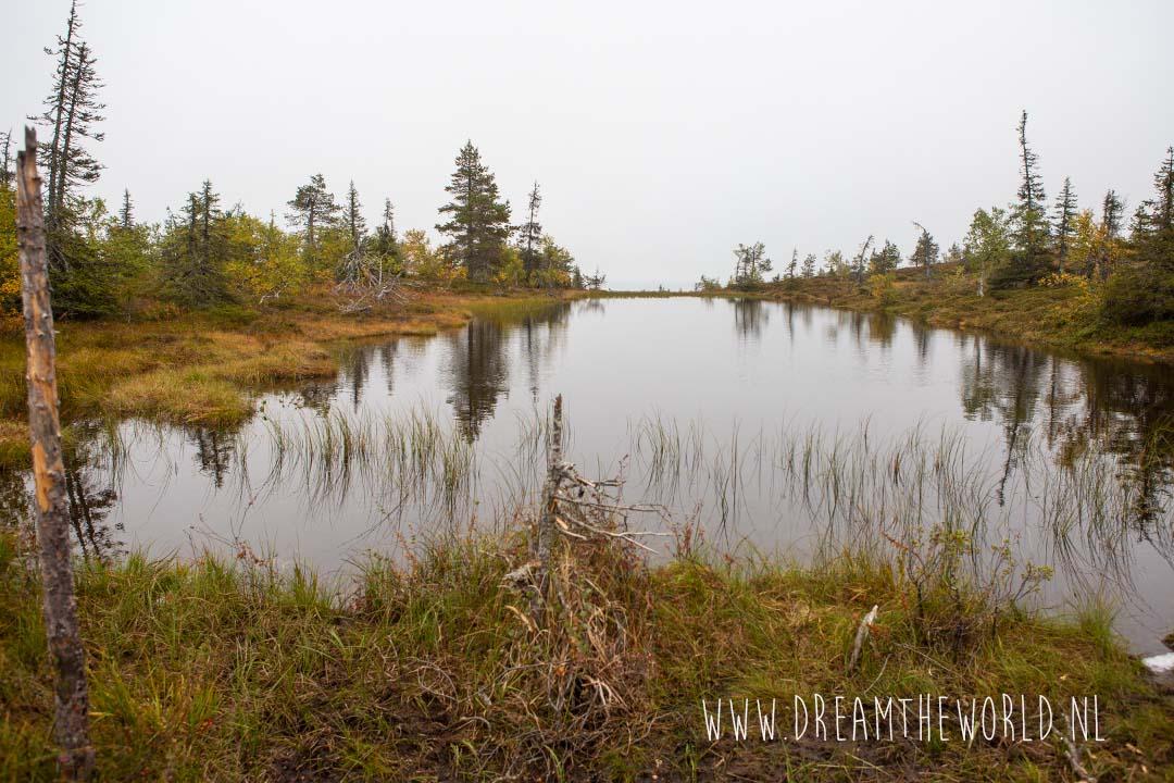 Riisitunturi NP Fins Lapland moeras